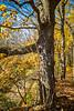 Katy Trail near Rocheport, Missouri - 11-9-13 - C1-0323 - 72 ppi