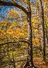 Katy Trail near Rocheport, Missouri - 11-9-13 - C1-0205 - 72 ppi-2