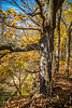Katy Trail near Rocheport, Missouri - 11-9-13 - C1-0311 - 72 ppi