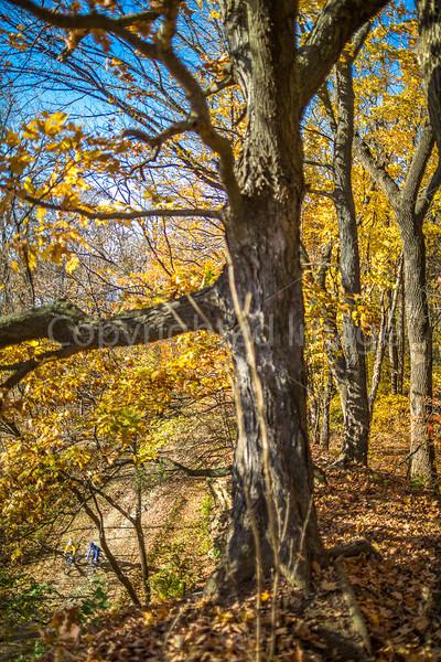 Katy Trail near Rocheport, Missouri - 11-9-13 - C1-0274 - 72 ppi