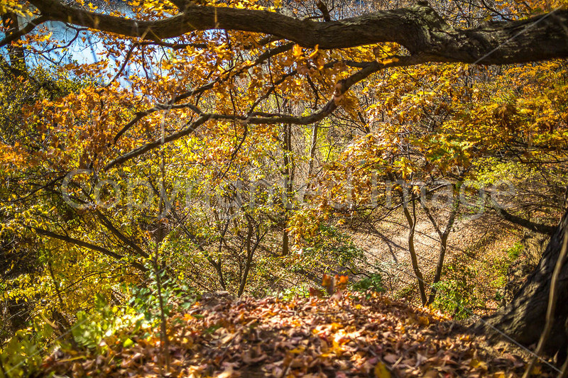 Katy Trail near Rocheport, Missouri - 11-9-13 - C1-0321 - 72 ppi