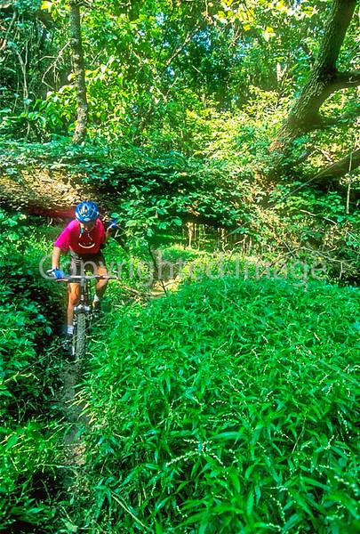 Mountain biker negotiating narrow single-track along Meramec River bottoms in eastern Missouri - part of Chubb Trail - 72 ppi