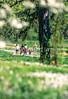 Cyclist in St  Louis, Missouri's, huge urban Forest Park - 21 - 75%-2