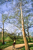 Cyclist in St  Louis, Missouri's, huge urban Forest Park - 6 - 72 ppi - 75% quality