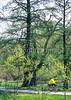 Cyclist in St  Louis, Missouri's, huge urban Forest Park - 20 - 75%-2