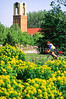 Cyclist in St  Louis, Missouri's, huge urban Forest Park - 5 - 72 ppi - 75% quality