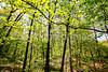 Weldon Springs Conservation Area on Missouri River -0125 - 72 ppi