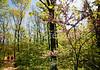 Weldon Springs Conservation Area on Missouri River -0024 - 72 ppi