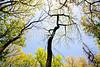Weldon Springs Conservation Area on Missouri River -0072 - 72 ppi