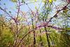 Weldon Springs Conservation Area on Missouri River -0151 - 72 ppi