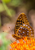 ACA - TransAm - Missouri - C1-0420 - Wildlife along Hwy 106 near Eminence - 72 ppi