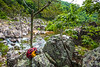 Johnson's Shut-Ins State Park, Missouri - C2-0183 - 72 ppi