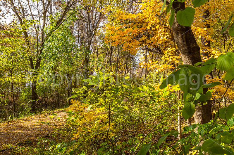 Katy Trail near Rocheport, MO - C3-0187 - 72 ppi