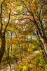Katy Trail near Rocheport, MO - C2-0126 - 72 ppi