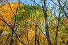 Katy Trail near Rocheport, MO - C1-0013 - 72 ppi