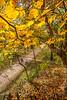 Katy Trail near Rocheport, MO - C2-0032 - 72 ppi