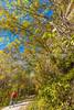Katy Trail near Rocheport, MO - C1-0117 - 72 ppi