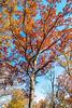 Trees on bluff above Katy Trail near Weldon Springs trailhead in Missouri - C1-0178 - 72 ppi