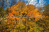 Katy Trail near Rocheport, MO - C1-0212 - 72 ppi