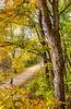 Katy Trail near Rocheport, MO - C2-0098 - 72 ppi