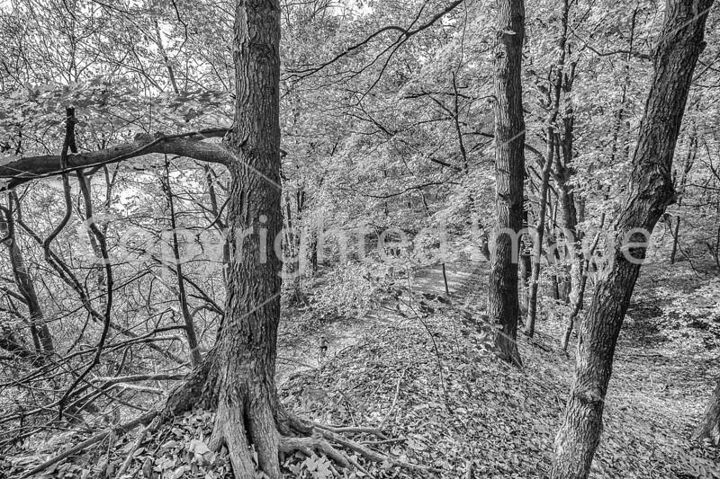 Katy Trail near Rocheport, MO - C1-3 - 72 ppi-2