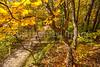 Katy Trail near Rocheport, MO - C2-0063 - 72 ppi