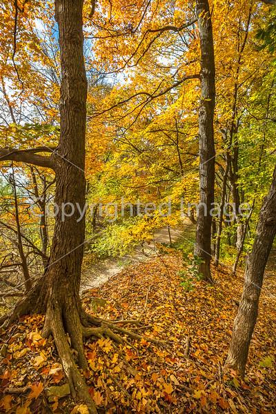 Katy Trail near Rocheport, MO - C1-0445 - 72 ppi