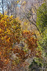 Katy Trail near Weldon Springs trailhead in Missouri - C3-0004 - 72 ppi