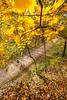 Katy Trail near Rocheport, MO - C2-0030 - 72 ppi