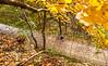 Katy Trail near Rocheport, MO - C2-0049 - 72 ppi-2