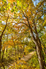 Katy Trail near Rocheport, MO - C2-0135 - 72 ppi