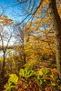 Katy Trail near Rocheport, Missouri - 11-9-13 - C2-0079 - 72 ppi