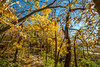 Katy Trail near Rocheport, Missouri - 11-9-13 - C1-0065 - 72 ppi