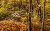 Katy Trail near Rocheport, Missouri - 11-9-13 - C2-0121 - 72 ppi-2