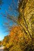 Katy Trail near Rocheport, Missouri - 11-9-13 - C2-0267 - 72 ppi