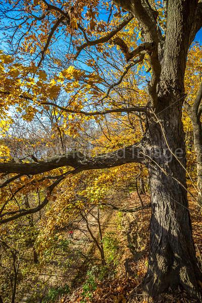 Katy Trail near Rocheport, Missouri - 11-9-13 - C1-0422 - 72 ppi