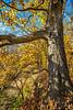 Katy Trail near Rocheport, Missouri - 11-9-13 - C1-0456 - 72 ppi