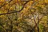 Katy Trail near Rocheport, Missouri - 11-9-13 - C1-0350 - 72 ppi-2