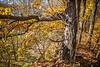 Katy Trail near Rocheport, Missouri - 11-9-13 - C1-0299 - 72 ppi