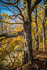 Katy Trail near Rocheport, Missouri - 11-9-13 - C1-0272 - 72 ppi