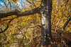 Katy Trail near Rocheport, Missouri - 11-9-13 - C1-0465 - 72 ppi