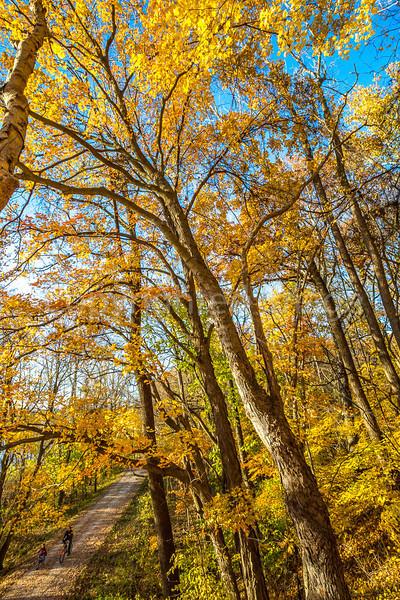 Katy Trail near Rocheport, Missouri - 11-9-13 - C2-0132 - 72 ppi