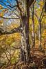 Katy Trail near Rocheport, Missouri - 11-9-13 - C1-0316 - 72 ppi