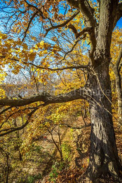 Katy Trail near Rocheport, Missouri - 11-9-13 - C1-0421 - 72 ppi