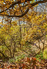 Katy Trail near Rocheport, Missouri - 11-9-13 - C1-0441 - 72 ppi-3