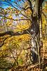 Katy Trail near Rocheport, Missouri - 11-9-13 - C1-0329 - 72 ppi