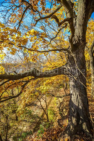 Katy Trail near Rocheport, Missouri - 11-9-13 - C1-0425 - 72 ppi