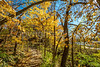 Katy Trail near Rocheport, Missouri - 11-9-13 - C1-0064 - 72 ppi