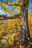 Katy Trail near Rocheport, Missouri - 11-9-13 - C1-0458 - 72 ppi