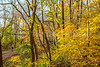 Katy Trail near Rocheport, Missouri - 11-9-13 - C2-0158 - 72 ppi